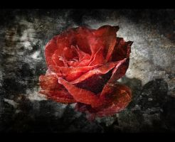 Dirty Rose by Zoso1024