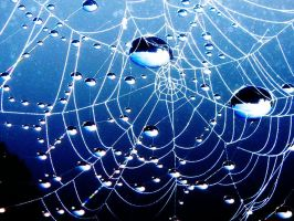 Spiderweb 3 by damerel