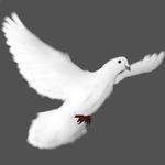 Dove by Ask-TF2-Red-Medic