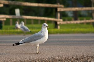 Why Did The Seagull Cross The Road? by NourhanB