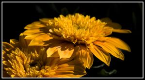Yellow Flowers I by tjackson80