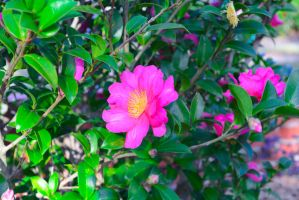 Pink Flowers Thursady December 4 2014 by ENT2PRI9SE