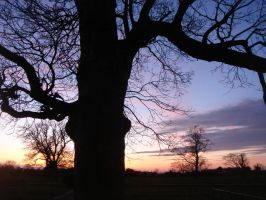 Night tree 4 by Estruda