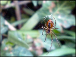 Spider by Ph1at1ine