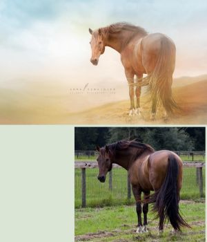 The Horse - before and after by cylonka