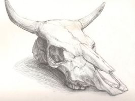 Cow skull by Queen-of-cydonia