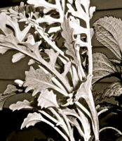 blackwhite foliage by Meeb98