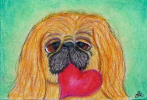 My Puppy Valentine Peke II by clay-dreams