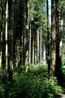 Bavarian Forest 4 by BlokkStox
