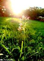 Sunrise Grass by muslim2proud