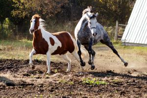 Horse Leaping Stock by Kcunac-Stock