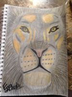Male lion by EJJetsetter