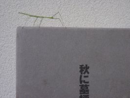 Stick Insect 1 by aru0