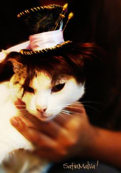 Cat with a hat by satinmalva