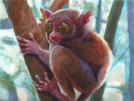 tarsier by auroracle