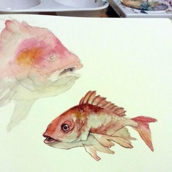 Red Snapper Watercolor wip by taho