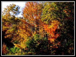 Autumnal Colors by midgard