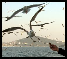 feed the seagulls by tolgagonulluleroglu