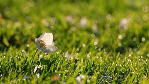 spring flower on the lawn by an0xx