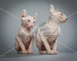 Two Hairless Cats by brish08