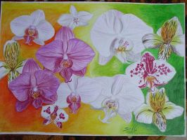 orchids by SusHi182