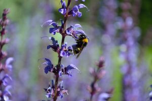 BUSY BEE by major-holdups
