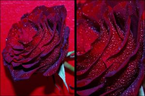 You are my Valentine by Saher4ever