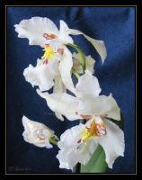 White Orchid on Blue by Sipramiili