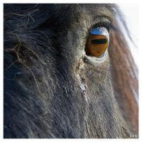 eye of the horse by dkj1974