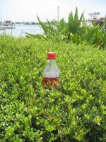 St. Augustine - Coke Bush by Dakota15