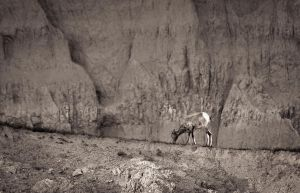 Badlands National Park - Wildlife by aeroartist