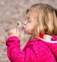 Blowing on the Dandelion by MariaWillhelm