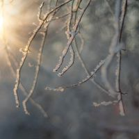 winter sunshine by PatiMakowska
