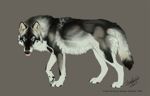 Wolf Adoptable AUCTION - Ended by Spike654