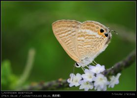 PU Butterflies 310508 III by log1t3ch
