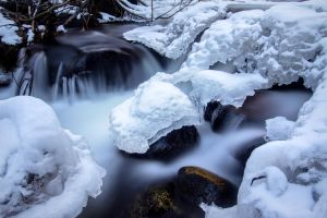 Galena Creek Nevada Winter Scene by sellsworth