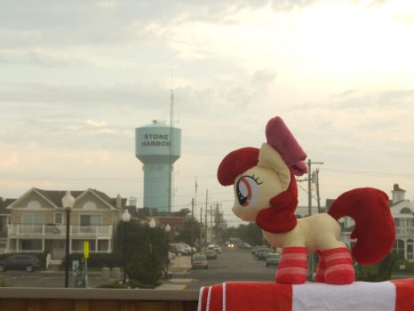 Apple Bloom in Stone Harbor by zapplebow