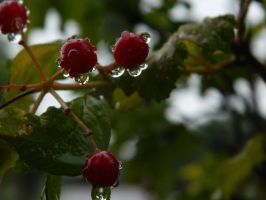 drip drop on currants by bloody-magpies