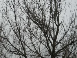 Bare Branches Stock 4 by Orangen-Stock