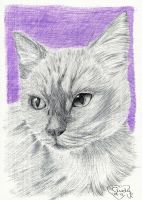 Purple Cat by Cindy-R
