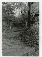Black and White trail by Makachop128