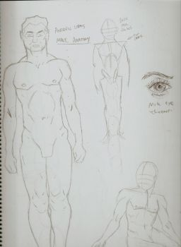Anatomy Study: Male by SkyTheArtist