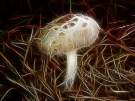 Toadstool by Bazz-photography