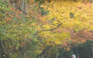 2014 Natural Autumn Color 3 by Miss-Tbones