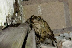 Toad Life Series  Mr Toad propping the bar up! by Pho-TasticMathew