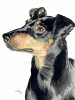 Manchester Terrier by RamonaQ