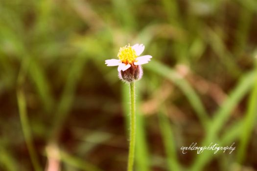 Wildflower by inahleong