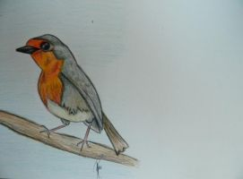 robin redbreast by fayettedream