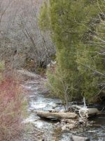South Hills Creek 8 by the-only-nighthawk