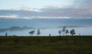Morning mist at the fen by LadyGreeny